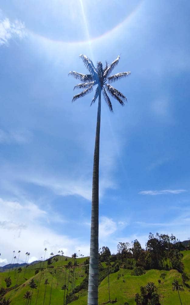 kolumbien-sehenswuerdigkeiten-valle-cocora