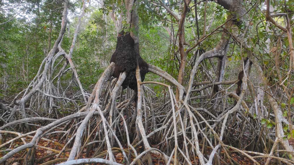 parque-tayrona-mangrove-nationalpark