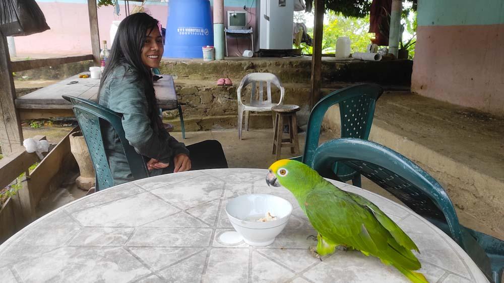 kolumbien-reise-tiere-regenwald